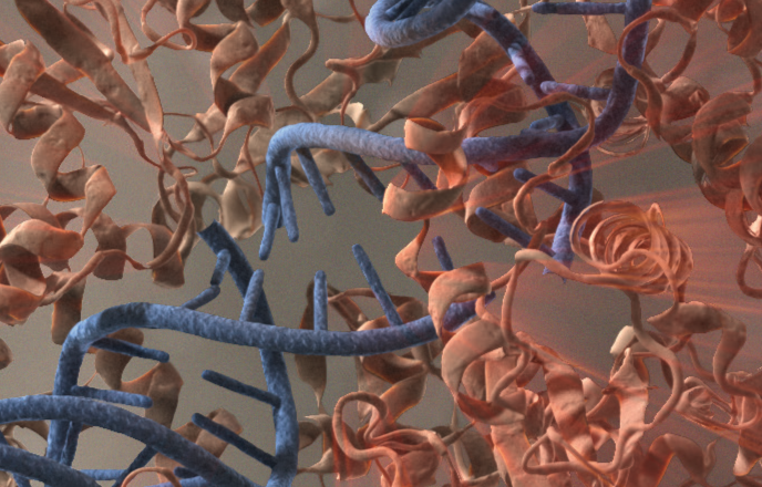Kloningsvektorer og Kompetente celler