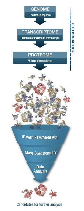 PTMScan® teknologi