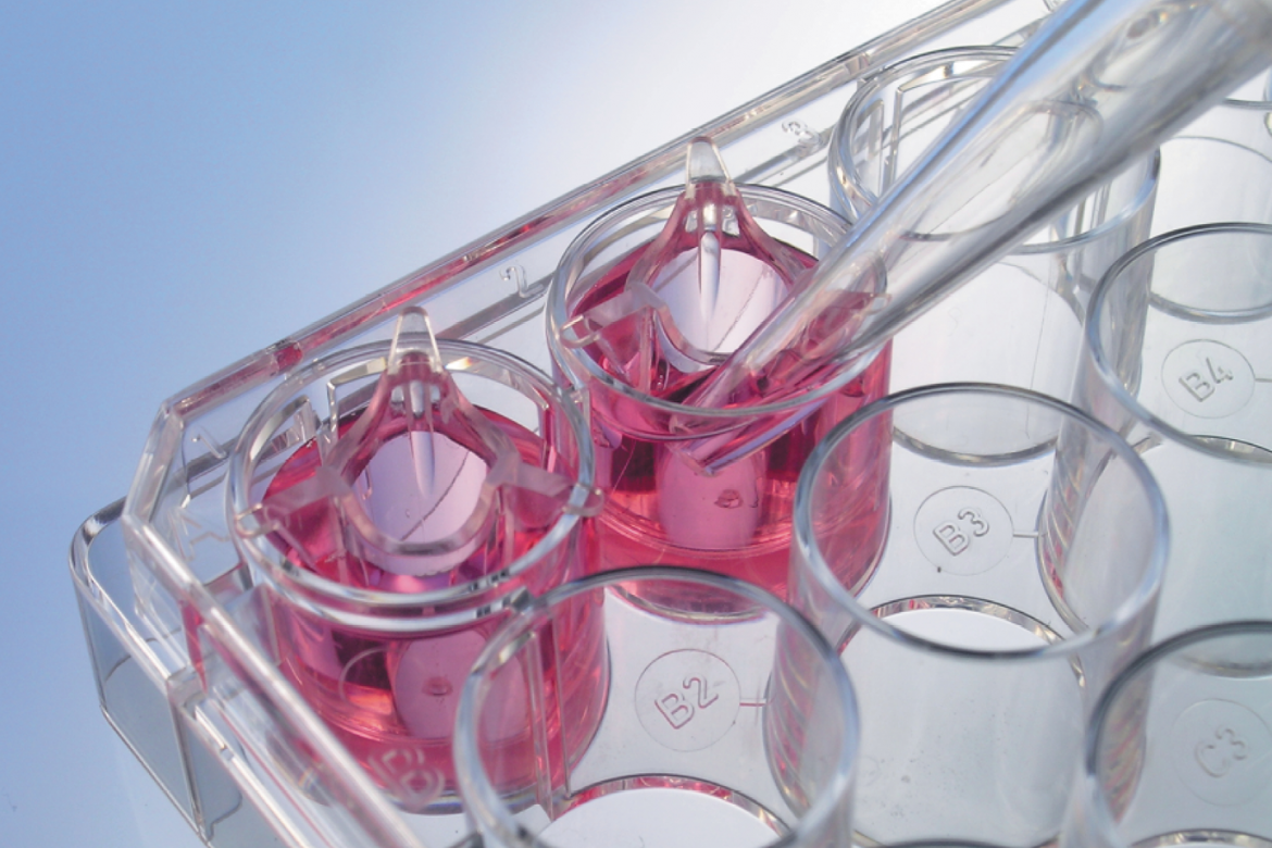 ThinCert™ cell culture inserts