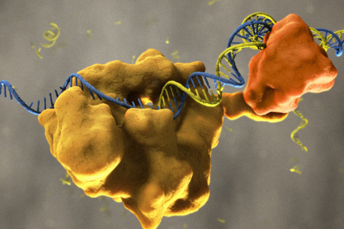 OneTaq® DNA Polymerase