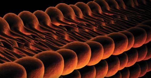 Ferroptose - en tidligere ukjent form for celledød