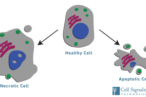 Cell Process: What is cell viability and how can it be measured?