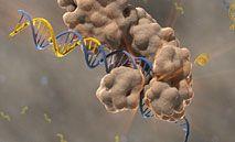 PCR og RT-PCR